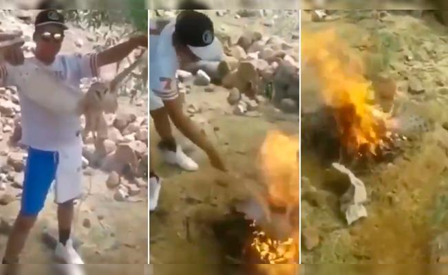 ¡Inhumanos! Queman viva a una lechuza porque pensaban que era una 'bruja'